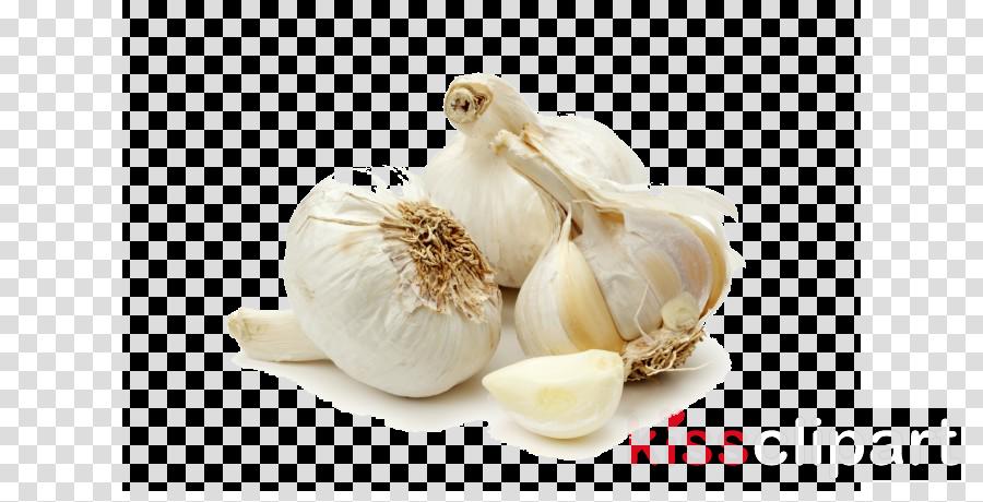 garlic elephant garlic vegetable food plant