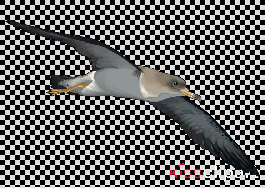 bird beak seabird albatross gull