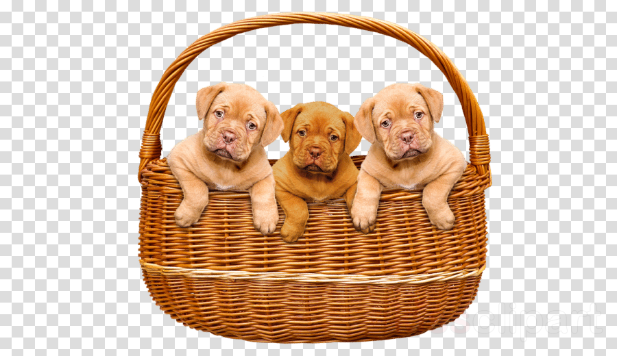 dog puppy wicker basket sporting group