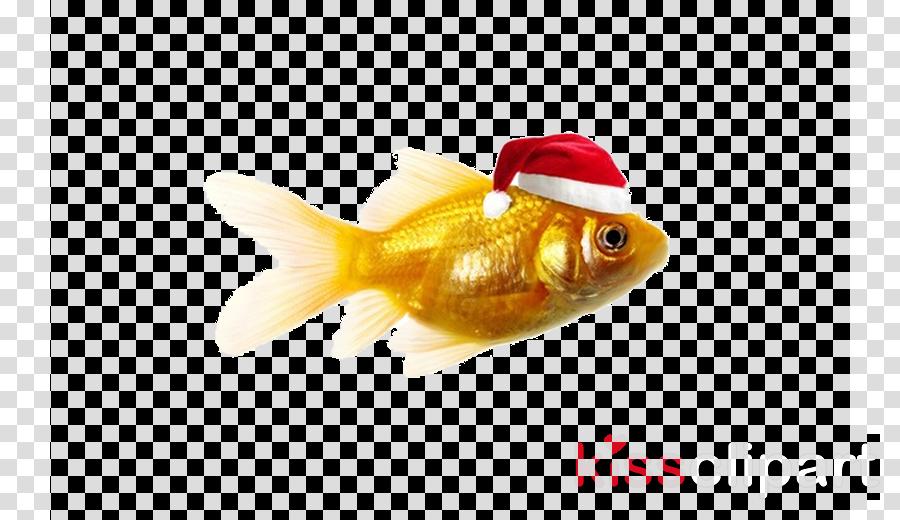 fish goldfish feeder fish fish bony-fish
