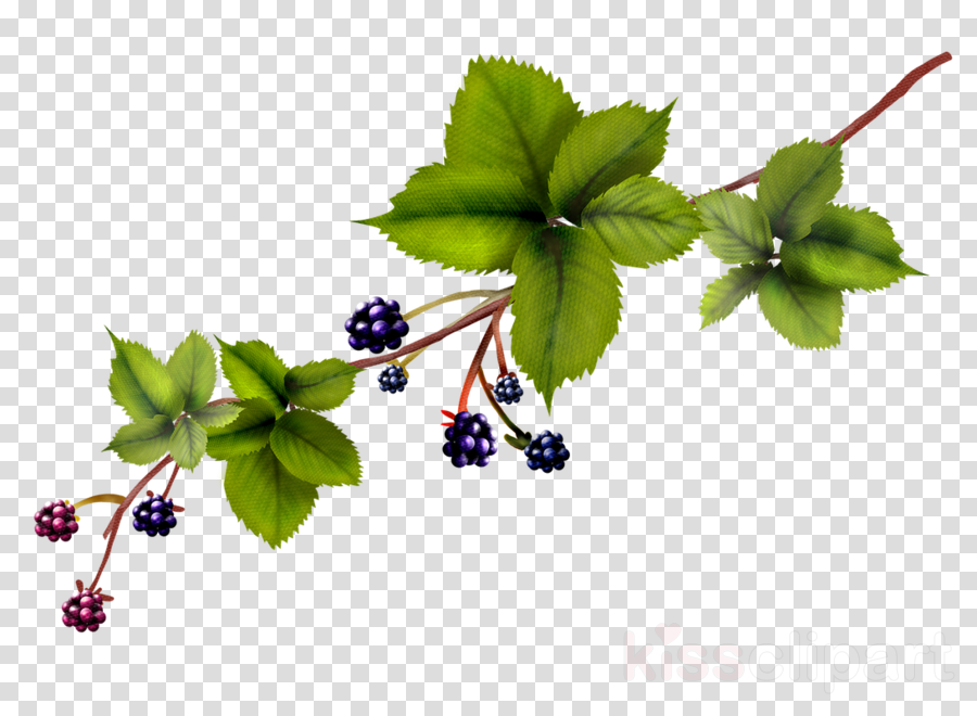 flower plant leaf branch herb