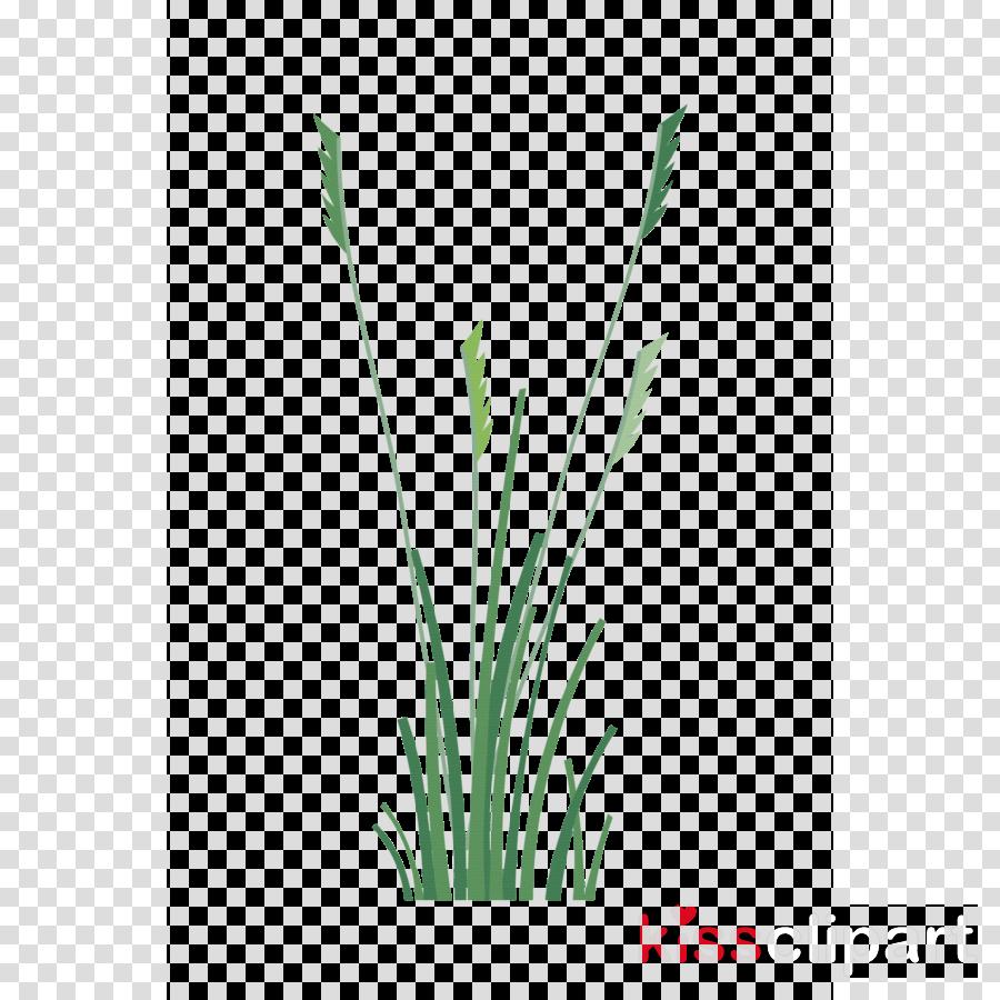 grass green plant leaf grass family