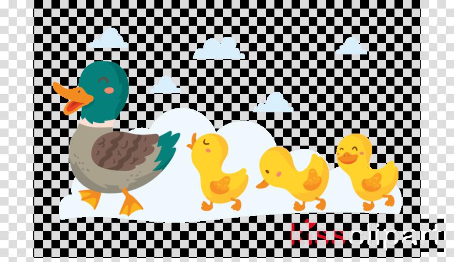 bird duck yellow water bird beak