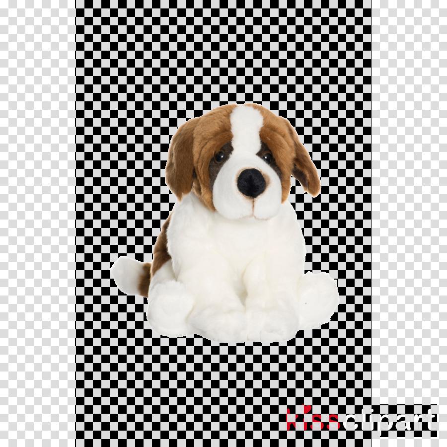 dog puppy st. bernard companion dog sporting group