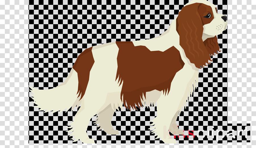 dog king charles spaniel spaniel cavalier king charles spaniel sporting group