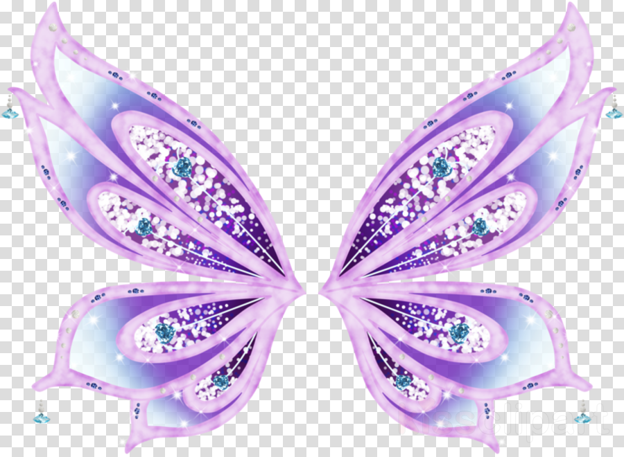 butterfly purple moths and butterflies insect violet