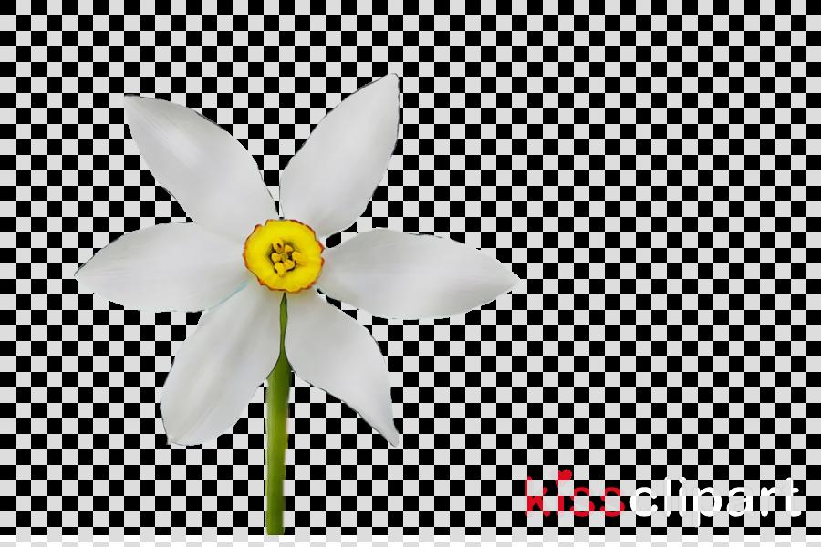white wheel petal flower plant