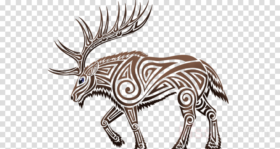 wildlife zebra animal figure snout line art