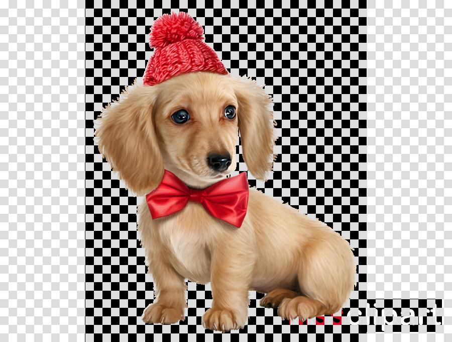 dog puppy dachshund golden retriever companion dog