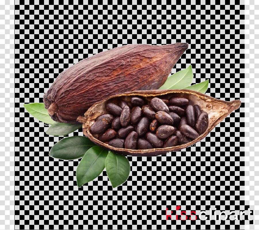 cocoa bean plant food tree bean