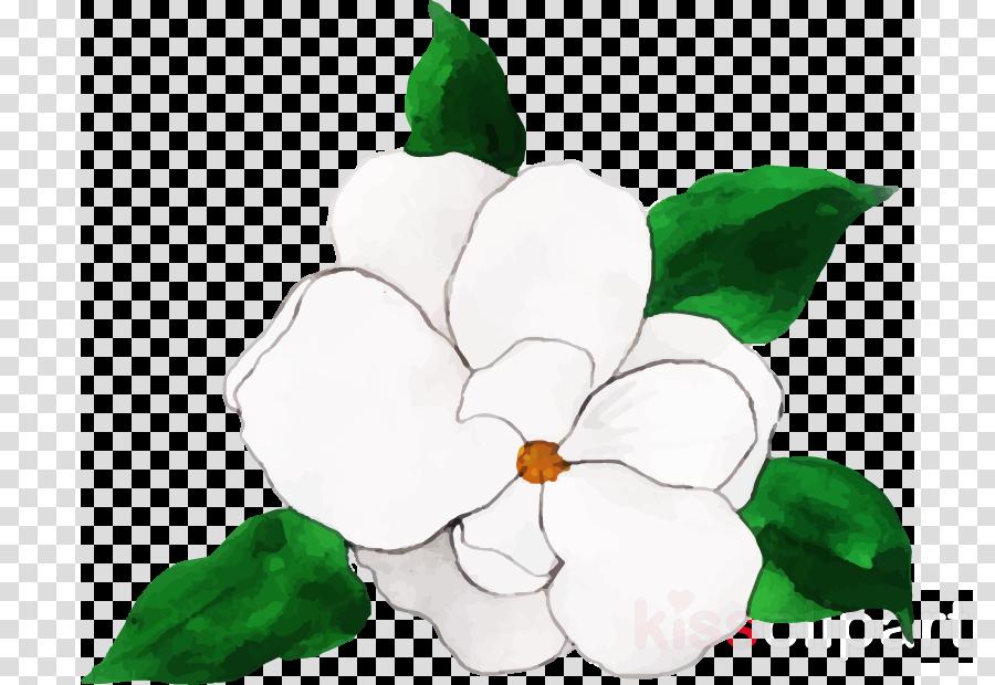 flower white green petal plant
