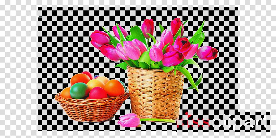 tulip flower plant pink cut flowers