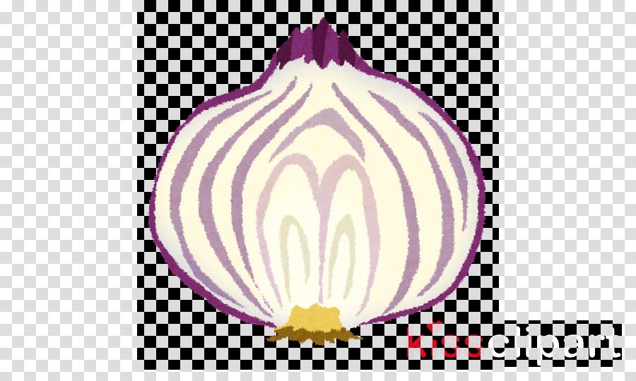violet purple onion vegetable allium