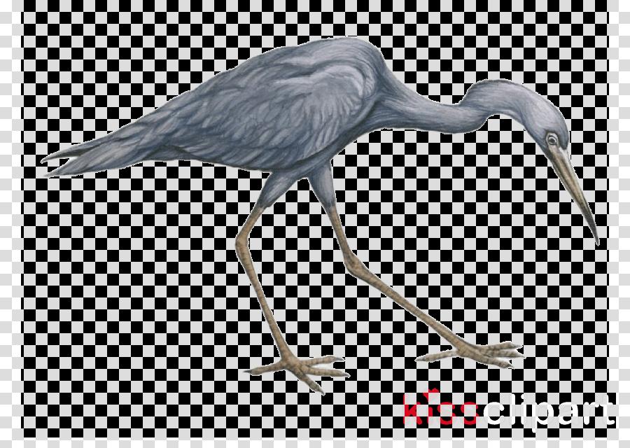 bird little blue heron beak crane-like bird heron