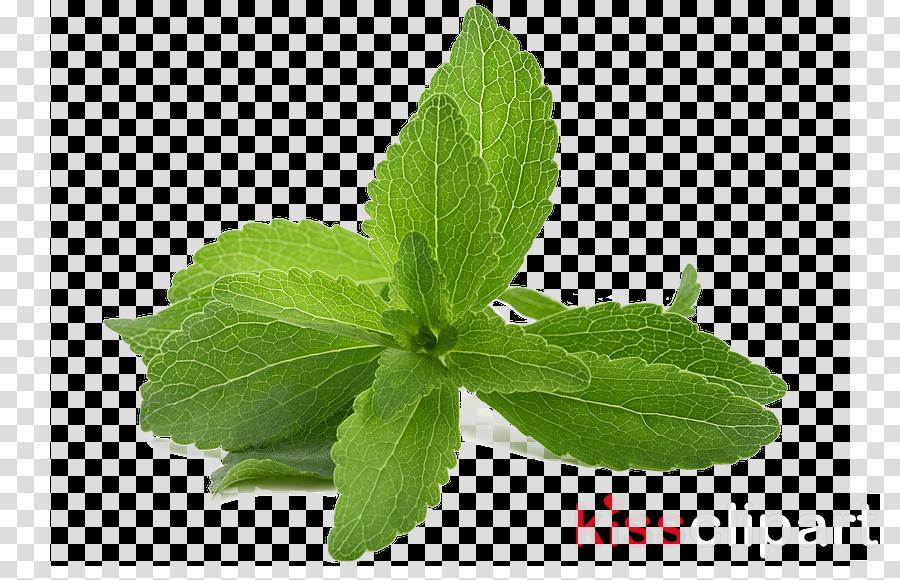 leaf plant mint herb flower