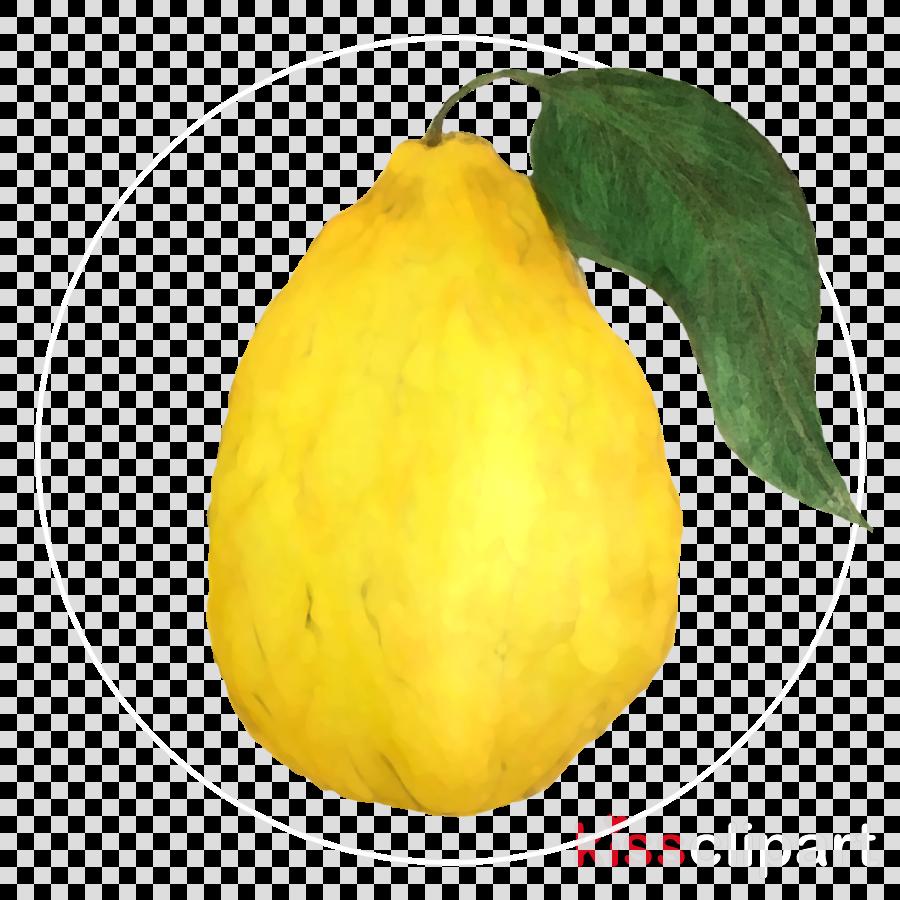 yellow fruit pear plant tree