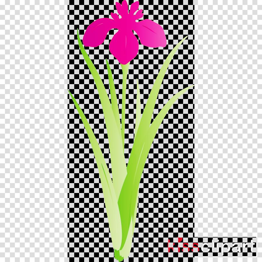 iris flower spring flower