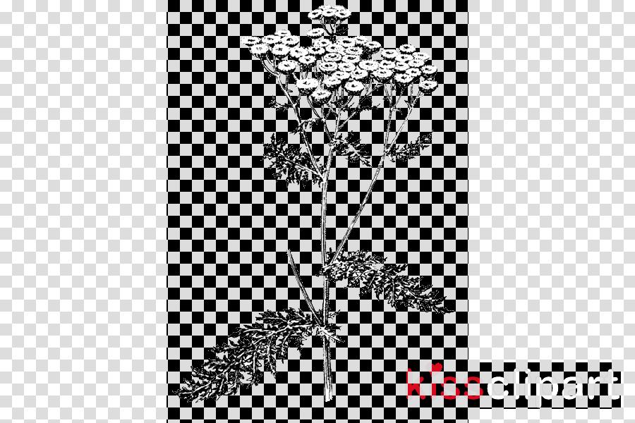 plant flower line art plant stem heracleum (plant)