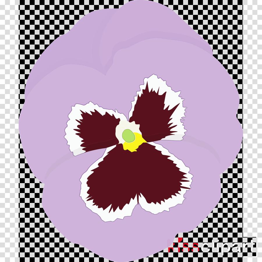 violet purple flower pansy plant