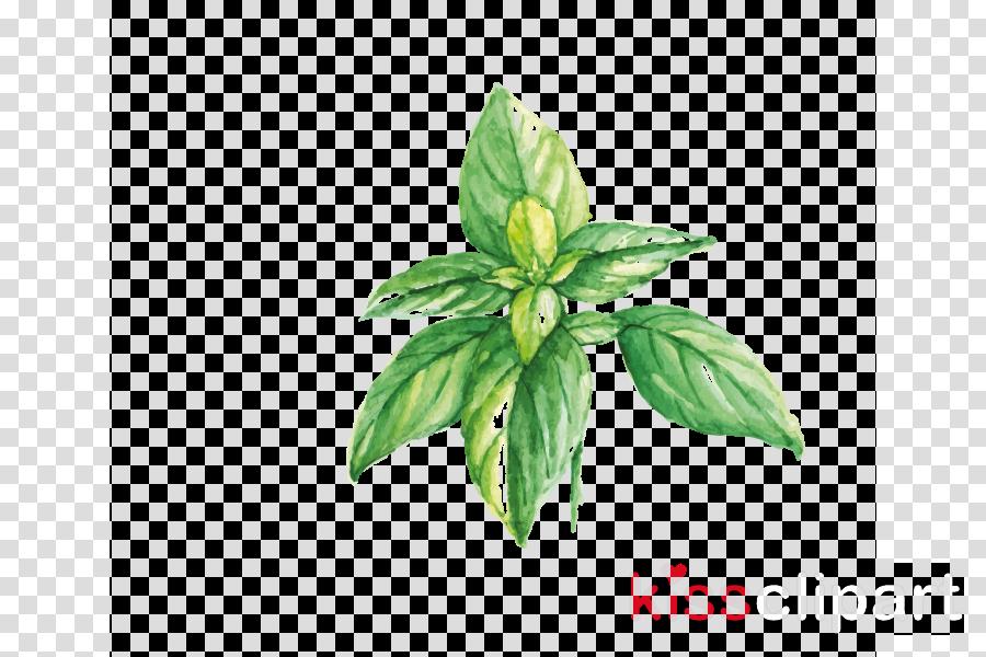 leaf plant flower basil herb