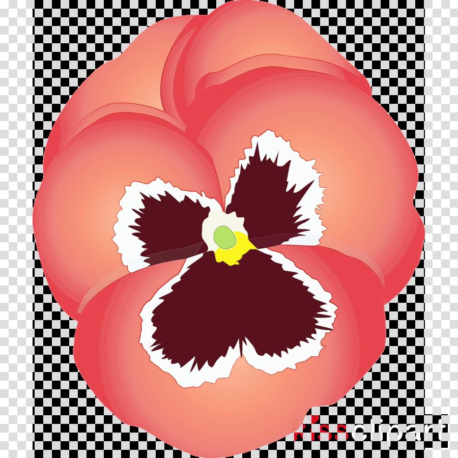 flower petal plant pansy violet family