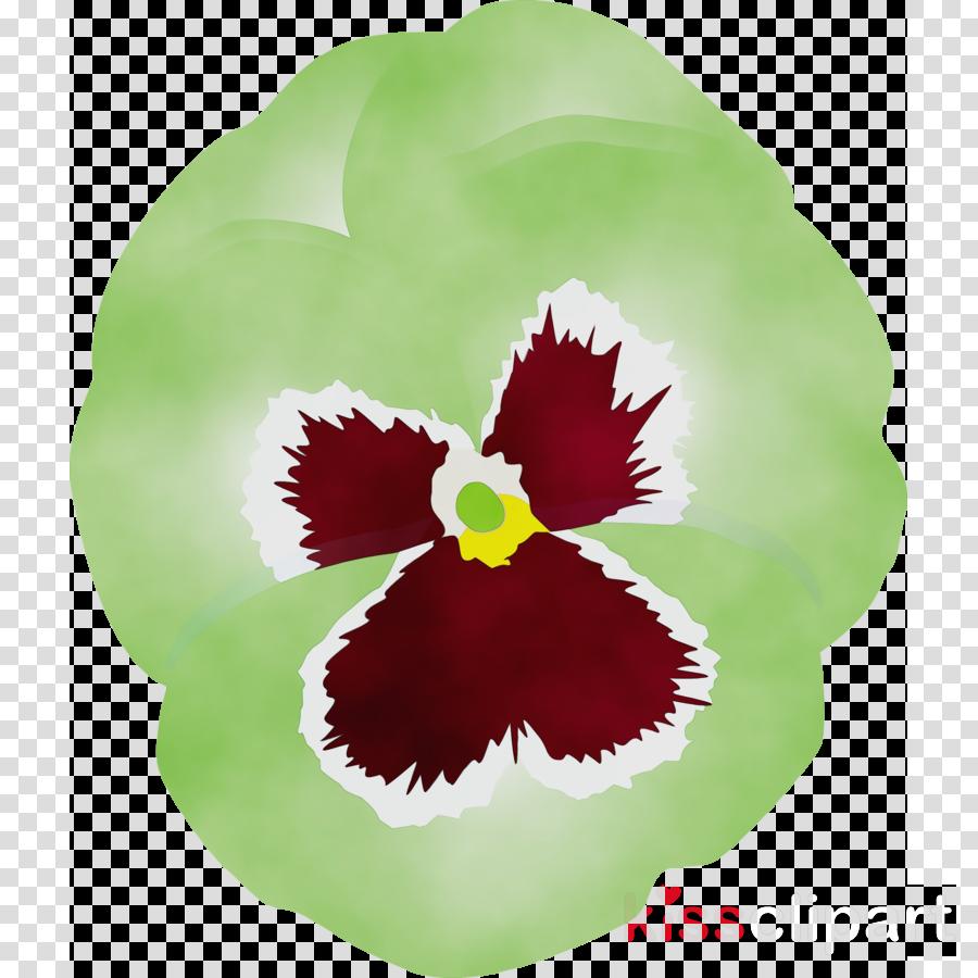 flower plant pansy petal leaf