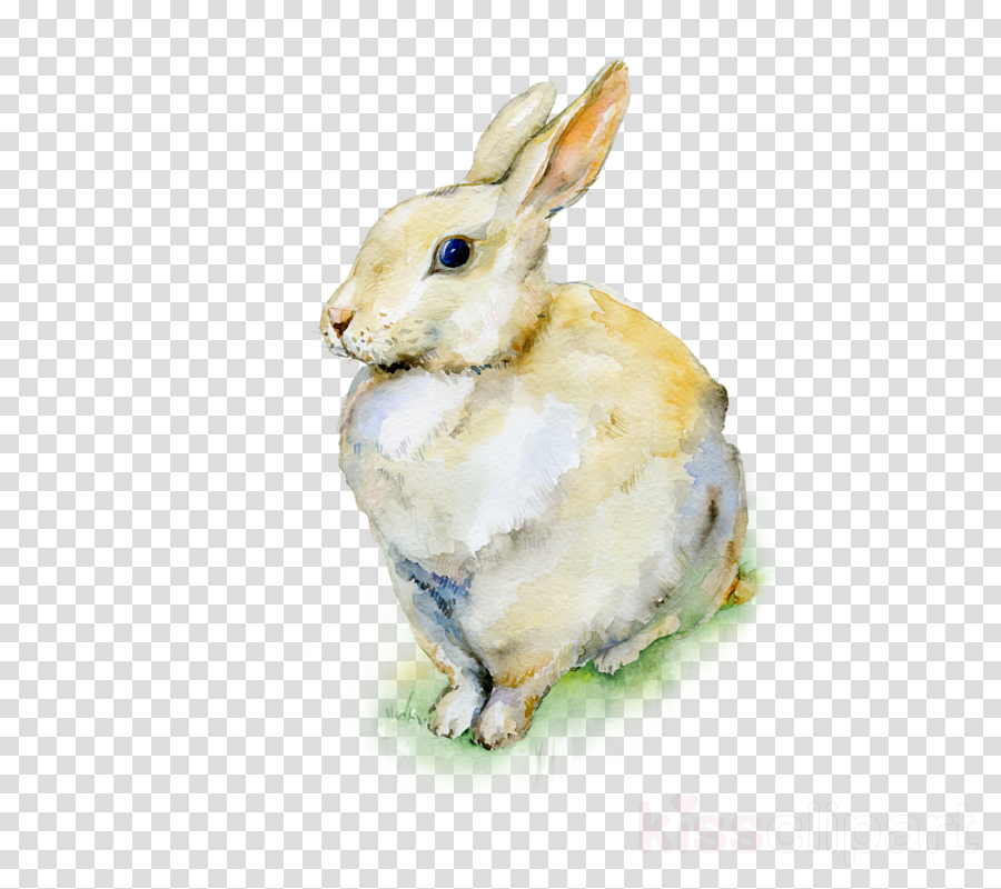 rabbit rabbits and hares watercolor paint hare snowshoe hare