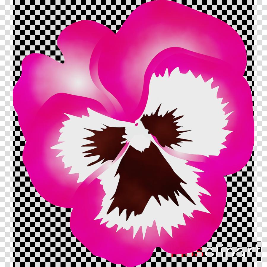 pink violet magenta purple flower