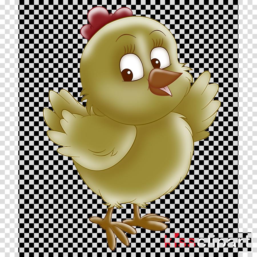 cartoon bird chicken animation beak