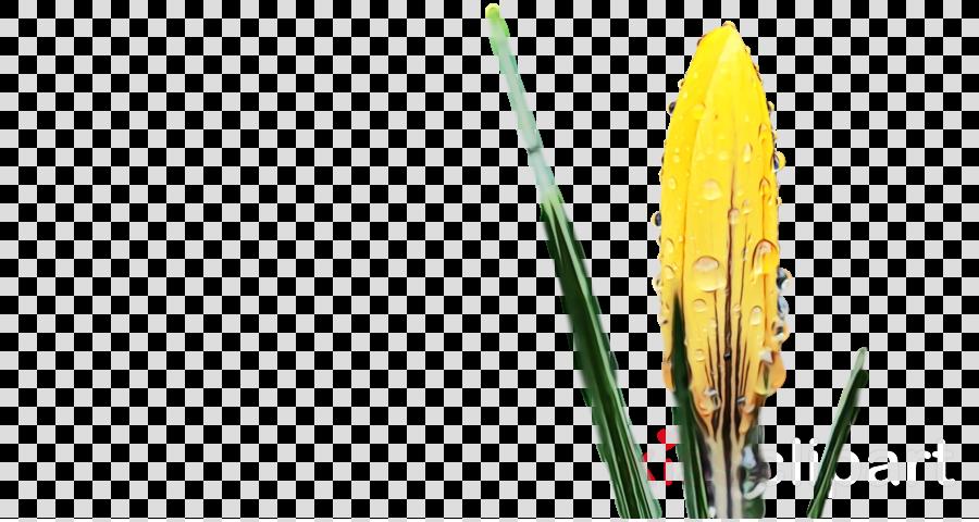 yellow plant flower leaf