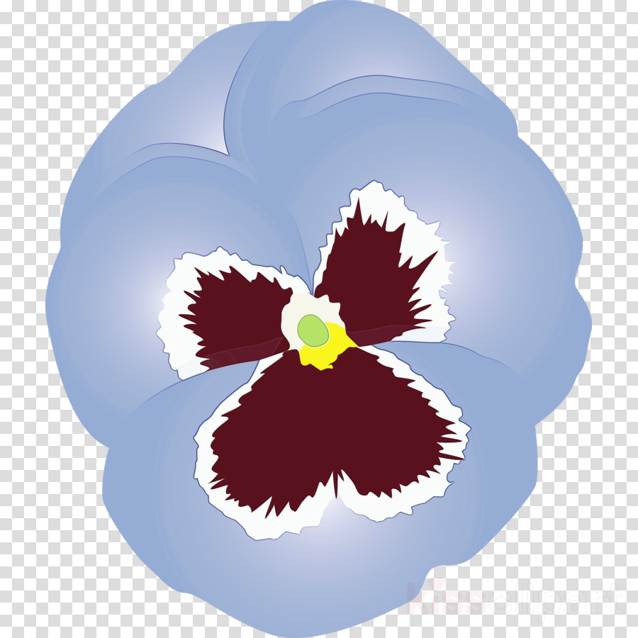 flower plant leaf pansy violet family