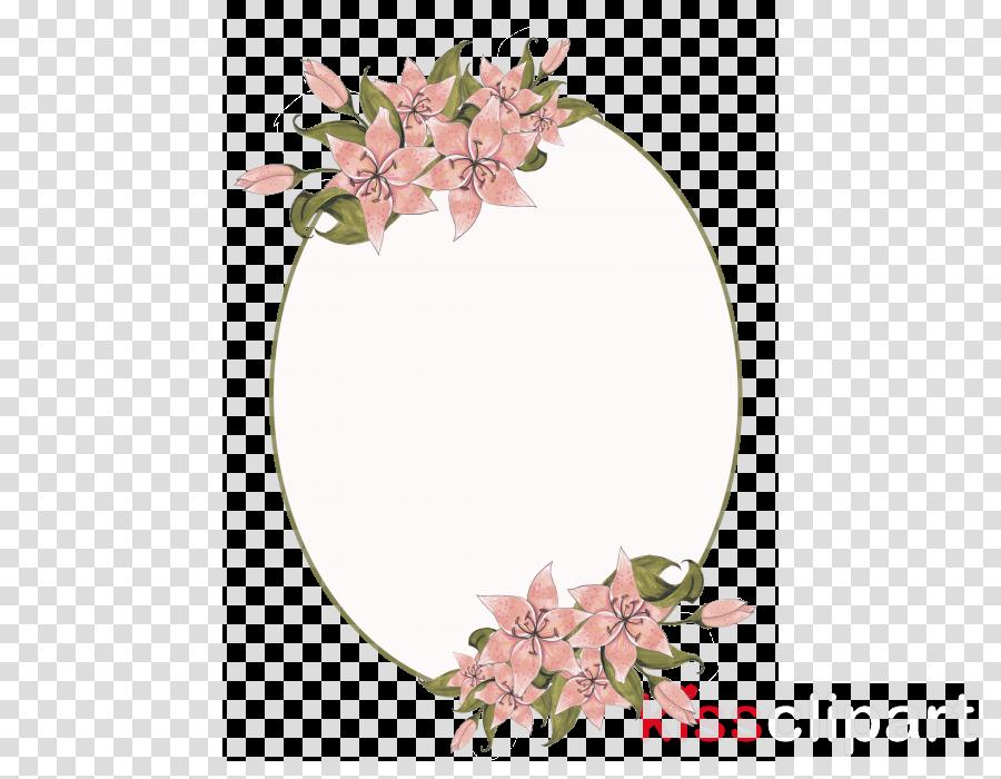 flower plant pink cut flowers dendrobium
