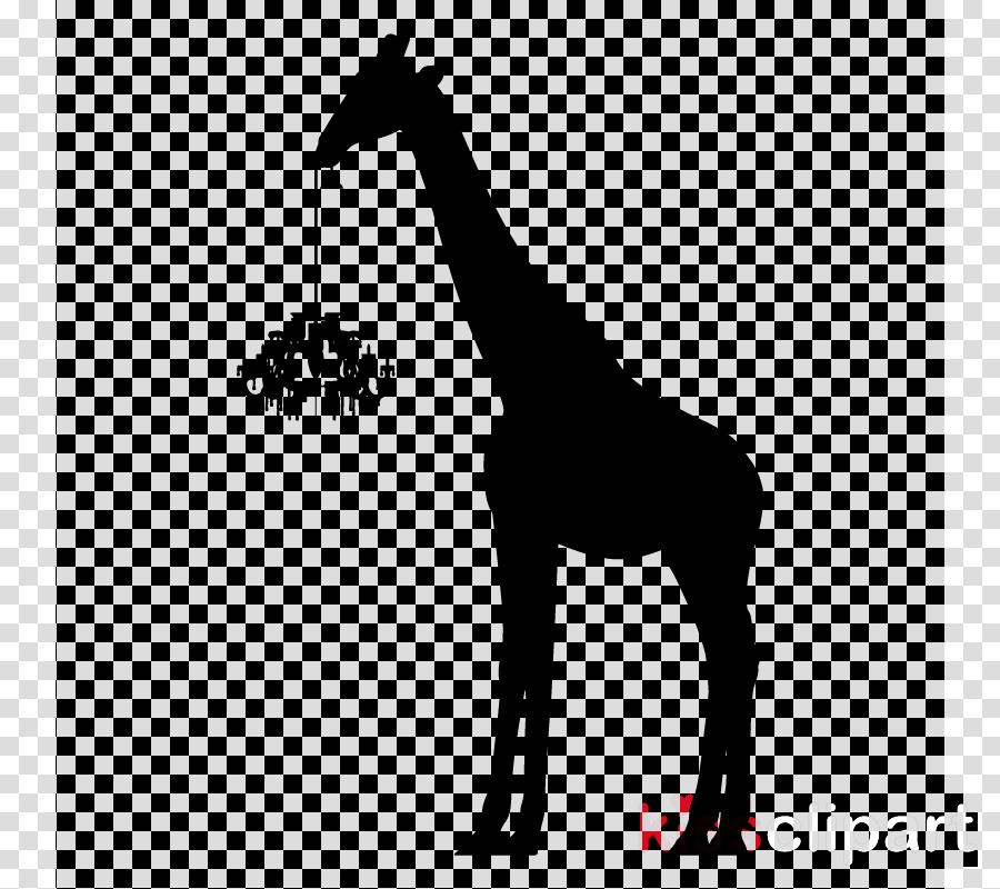 giraffe giraffidae wildlife snout silhouette