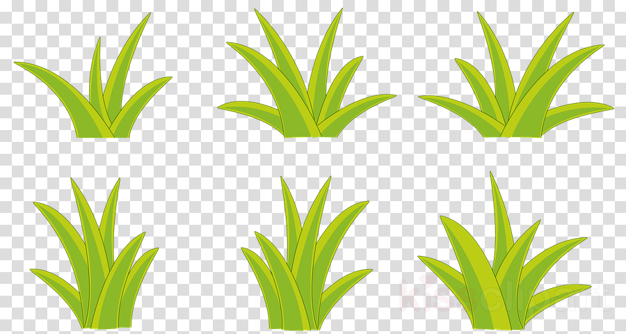 green houseplant grass plant flowerpot