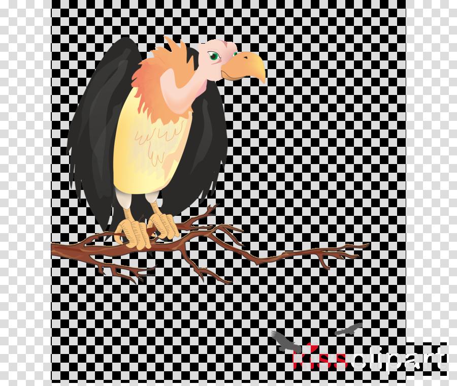 bird bird of prey vulture beak cartoon