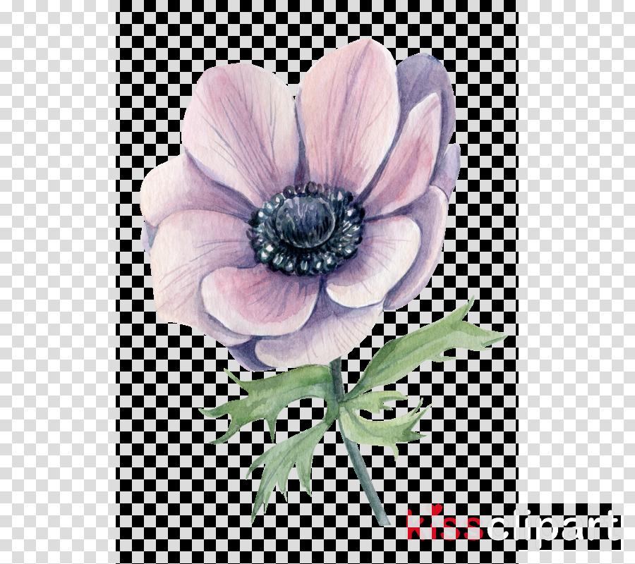 flower petal plant pink anemone