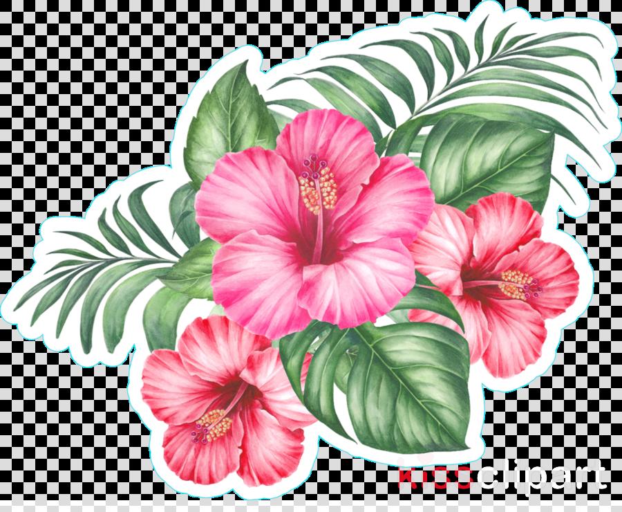 flower hibiscus plant pink hawaiian hibiscus