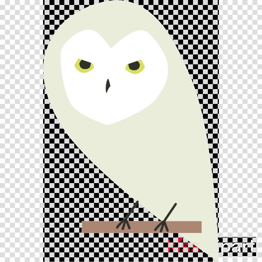owl snowy owl bird white barn owl