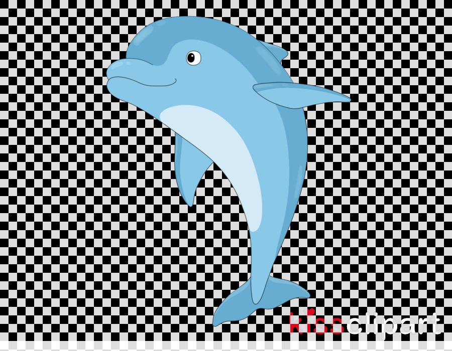 dolphin bottlenose dolphin cetacea short-beaked common dolphin fin