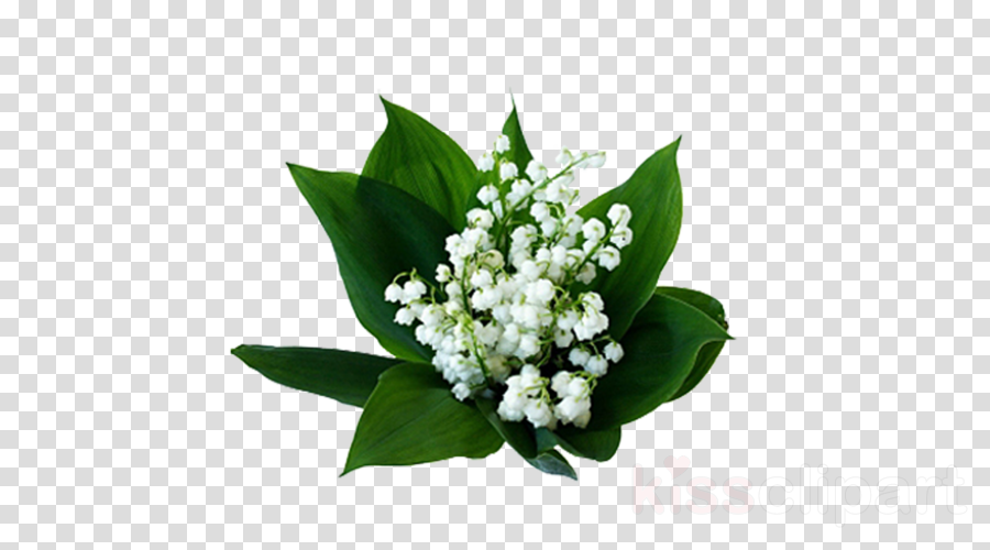 flower lily of the valley plant bouquet cut flowers