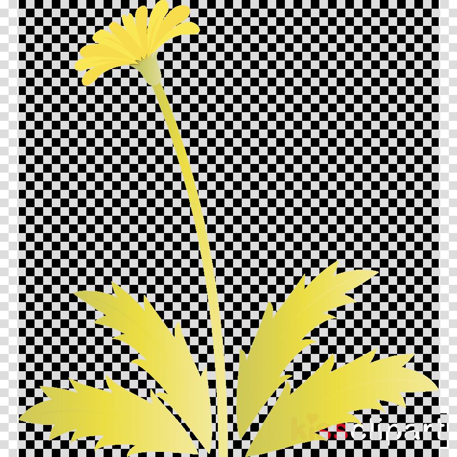 yellow flower plant leaf dandelion