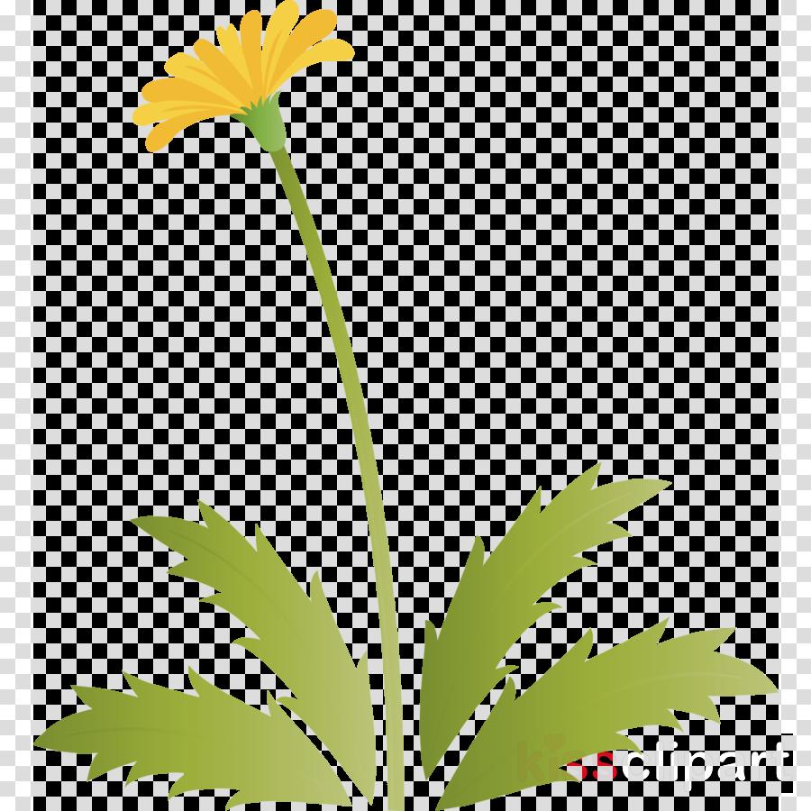 Dandelion flower easter day flower spring flower