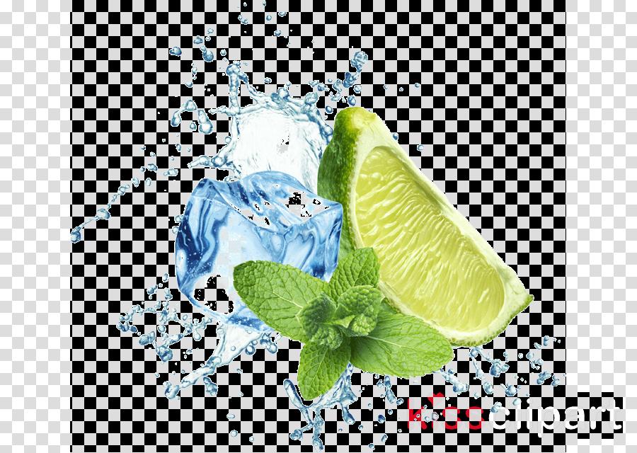 lime citrus plant leaf persian lime