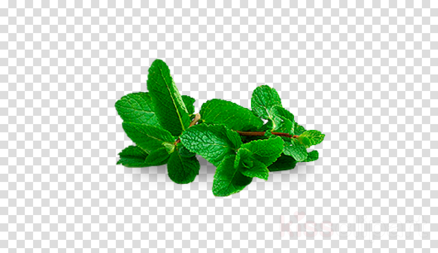 leaf green plant herbal flower
