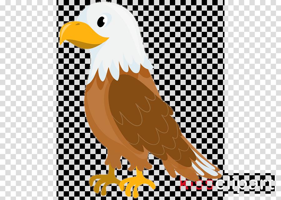 bird bald eagle eagle beak bird of prey