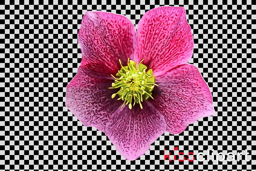 flower petal plant pink violet