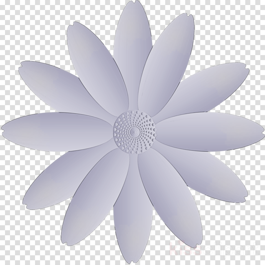 marguerite flower spring flower