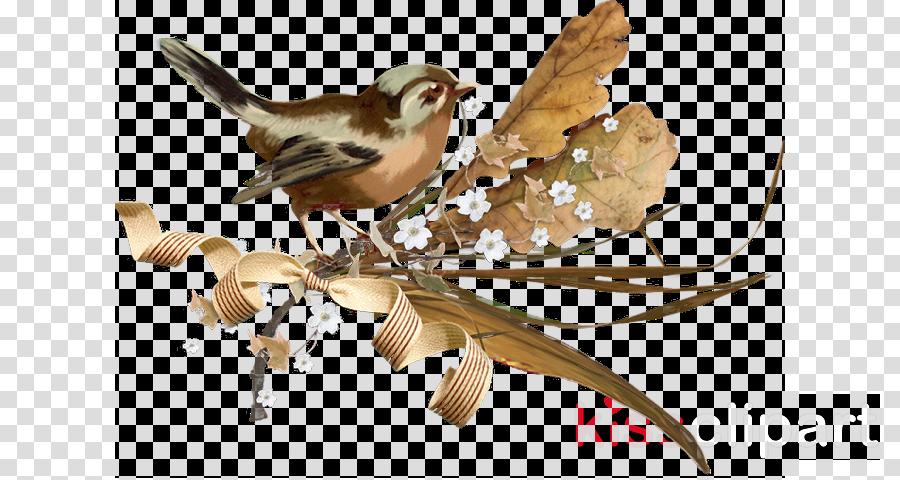 bird house sparrow songbird perching bird sparrow