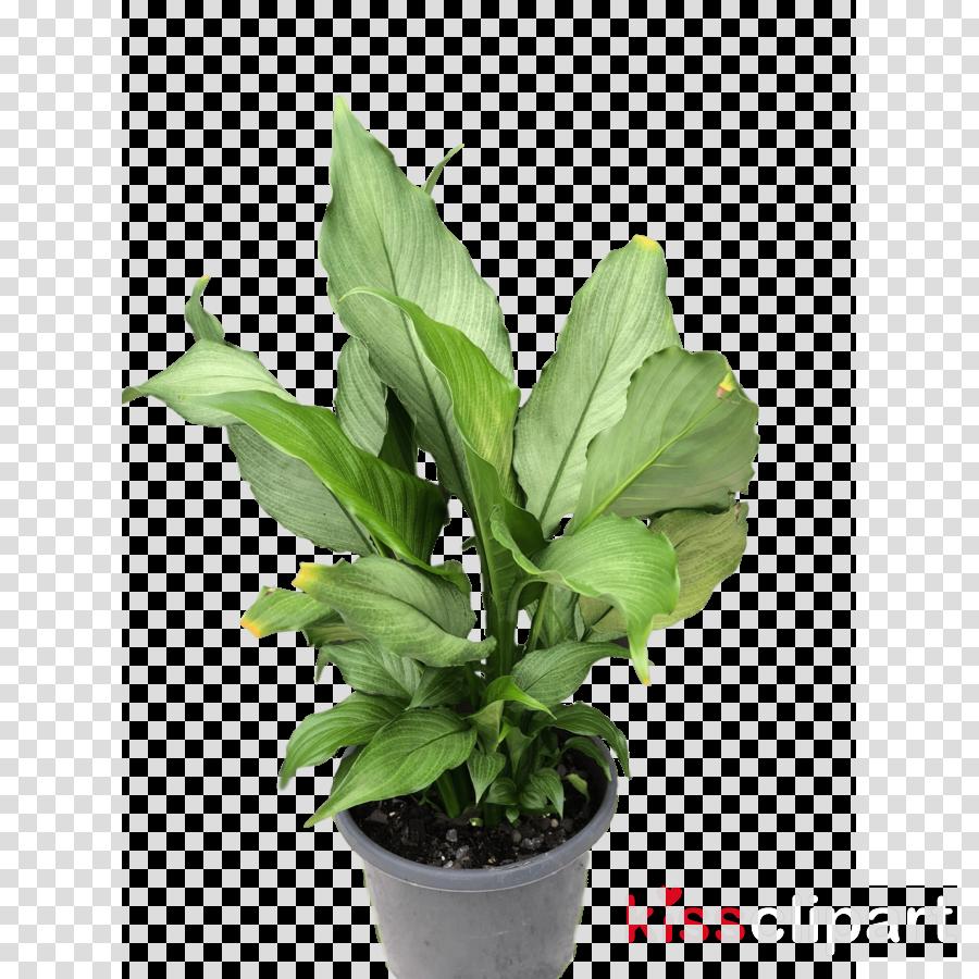 flower plant leaf houseplant flowerpot