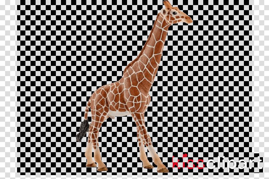 giraffe giraffidae animal figure wildlife neck